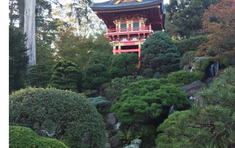 Numerous luscious plants grow at the Japanese Tea Garden located around Golden Gate Park.