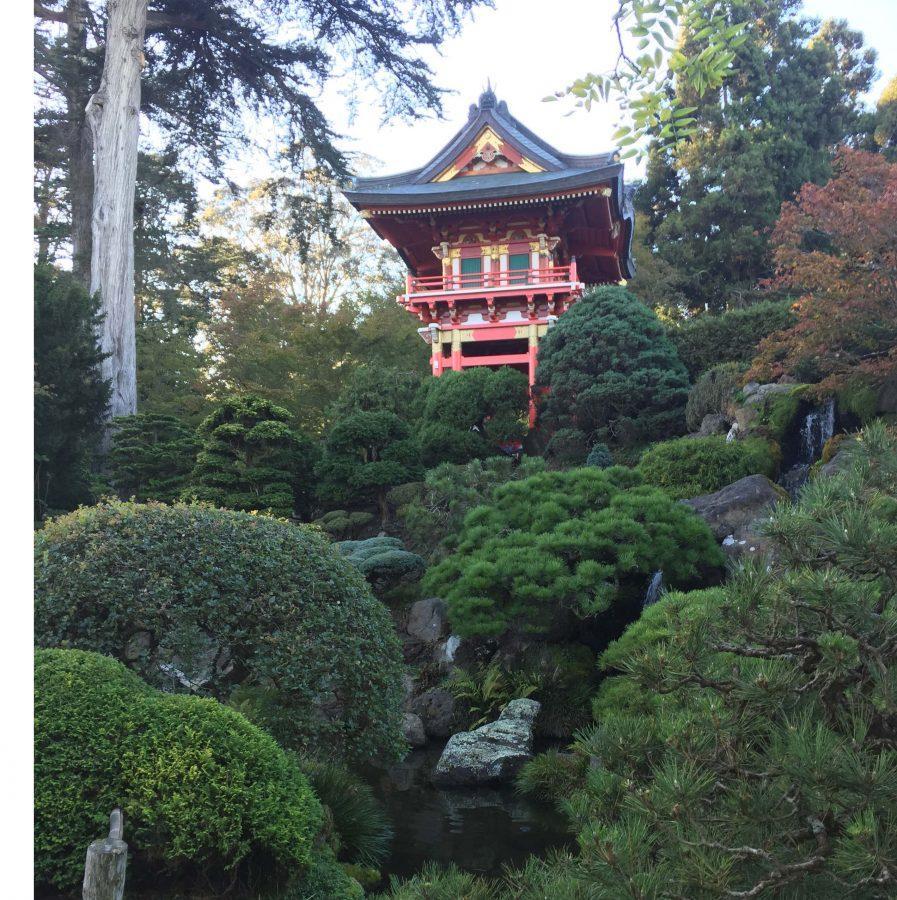 Numerous+luscious+plants+grow+at+the+Japanese+Tea+Garden+located+around+Golden+Gate+Park.+